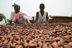 Mariama Zachary, 44, and Akua Azaiz, 20, tend to cocoa beans on a drying table on January 21, 2011 in Sawuah, Ghana. Cocoa beans are an important cash crop for the farmers in Sawuah, many of whom use the profits to send their children to school.