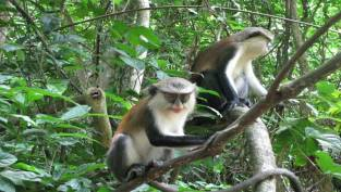 THE TAFI MONKEY VILLAGE