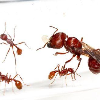 ants The city of Ants