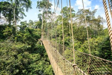 Canopy Walkway Ghana canopy-walkway-in-kakum-national-park-accra-region-ghana-west-africa