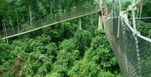 Canopy Walkway Ghana Kakum-National-Park-Ghana