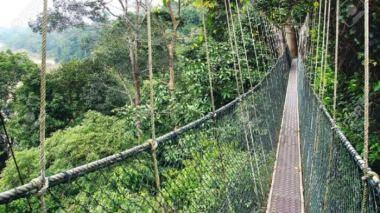 Canopy Walkway Ghana karnataka
