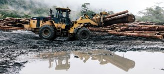 Ghana RAINFOREST Ghana no forests