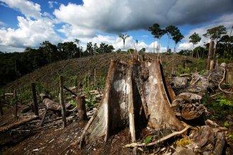 Ghana RAINFOREST No-forests
