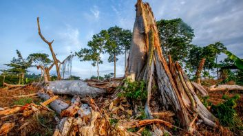 Ghana RAINFOREST ScioForest_Better_Cocoa